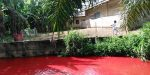 Blood Red Nsukwa River, Ghana