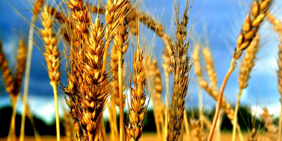 Shavuot & Replacement Theology, A Jewish Perspective