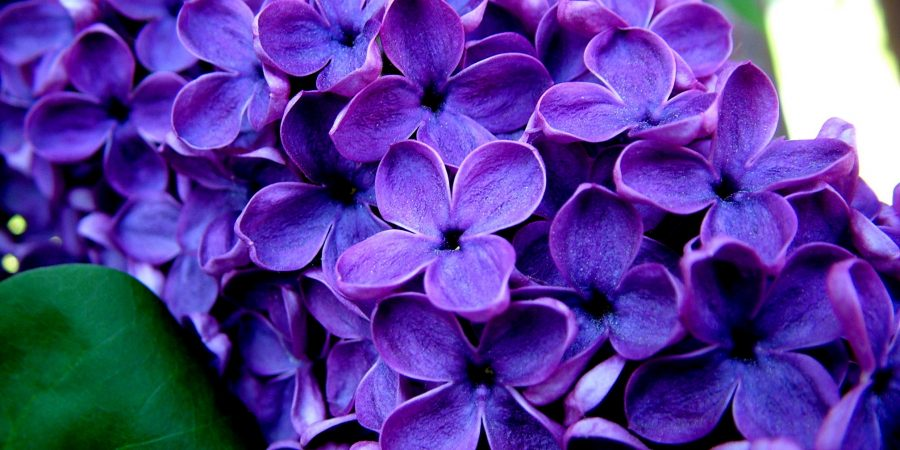 My Purple Flowers… Christine McDonald