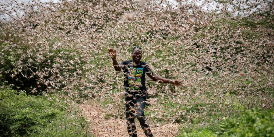 Locusts Sweeping Across the Middle East