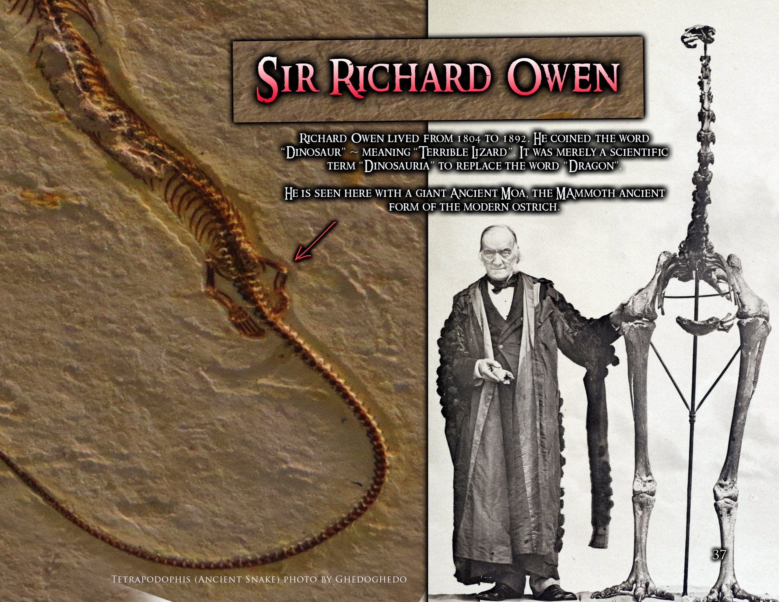 Sir Richard Owen with a Moa (Giant Ancient Ostrich) and an ancient snake with legs